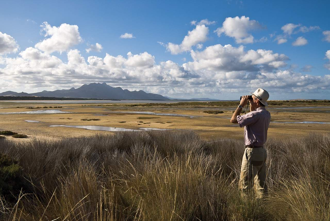 bird watching on flinders island