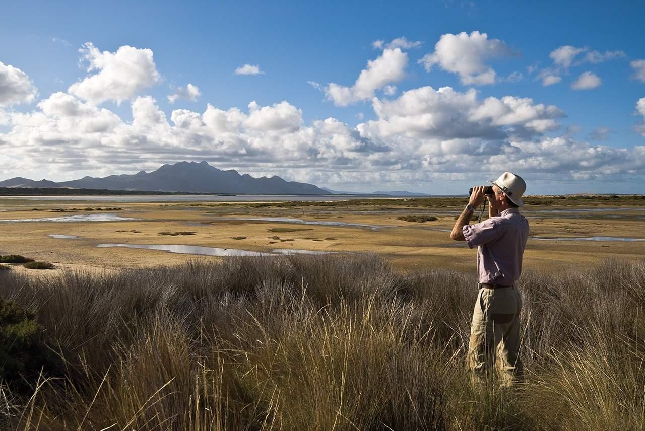 bird watching on flinders island